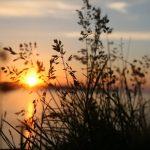 wildwood crest sunset celebrations