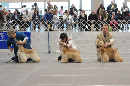 Boardwalk Kennel Club All Breed Dog Show – canceled