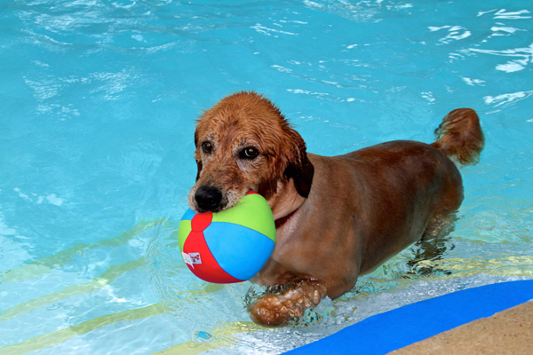 Moreys Doggie Dash