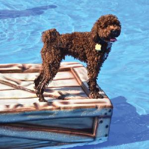 Doogie dash and splash